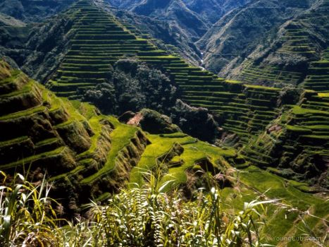 Ancient Rice Terraces, Philippines